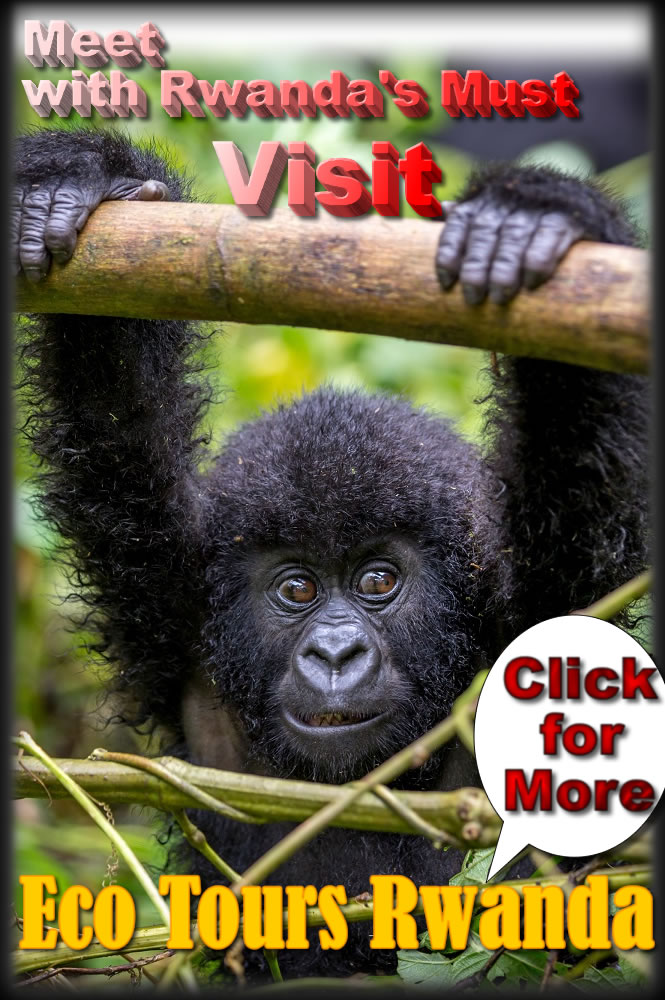 Visit Rwanda for Mountain Gorillas